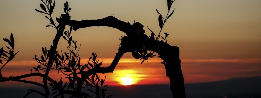 sunset-900